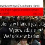 Czy Polonia jest aktywna w Irlandii?